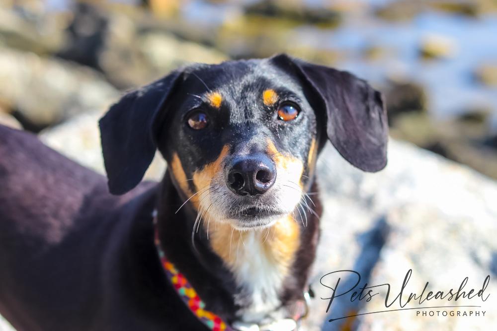 tsd-boothbay-harbor-dogs-calendar-2022-february