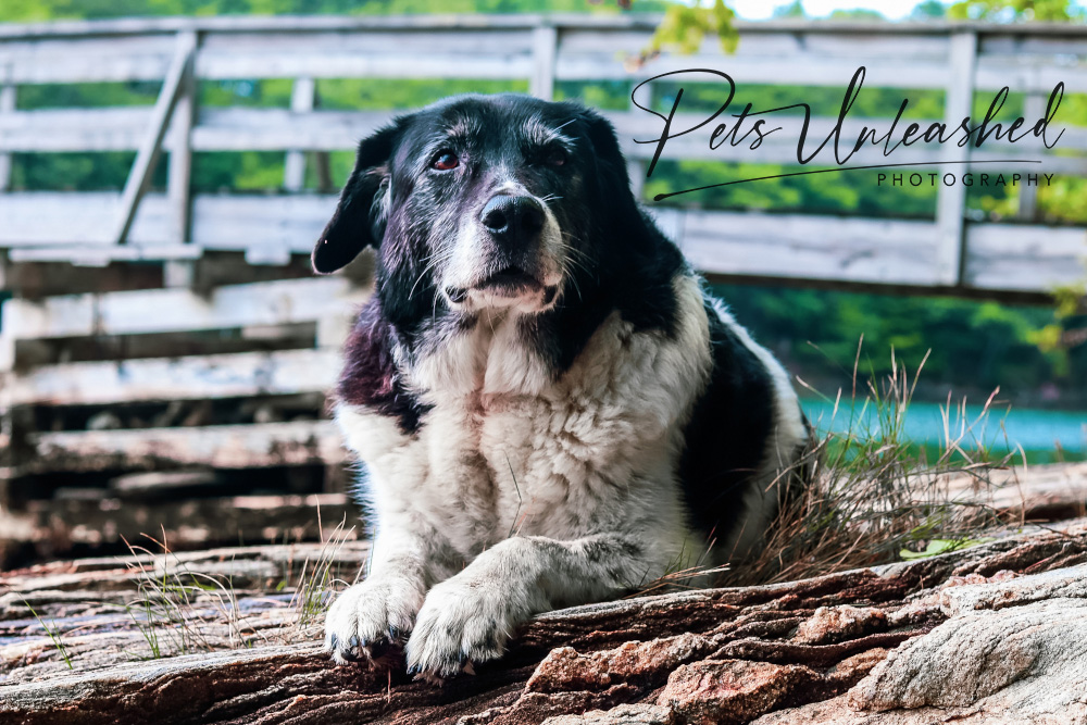 tsd-boothbay-harbor-dogs-calendar-2022-january