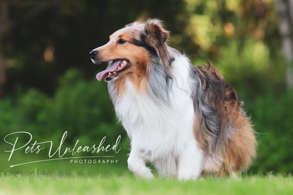tsd-boothbay-harbor-dogs-calendar-2022-march