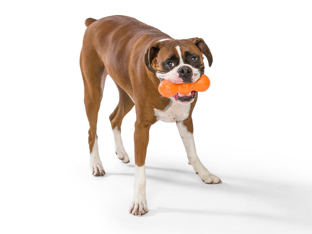 wp-dog-chew-toy-rumpus-4