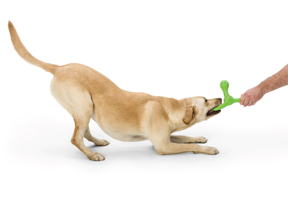 wp-dog-tug-toy-skamp-3