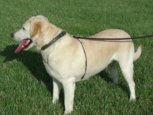 ww-dog-leash-6.jpg