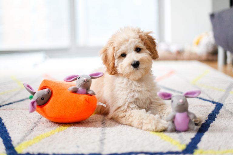 zp-bunny-burrow-soft-dog-toy-2