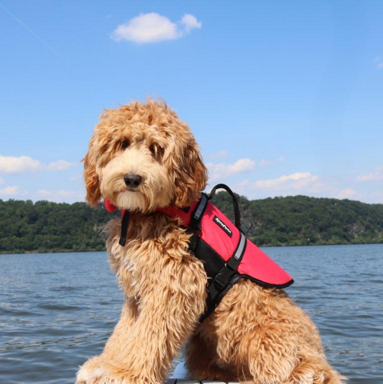 zp-dog-life-jacket-red-4