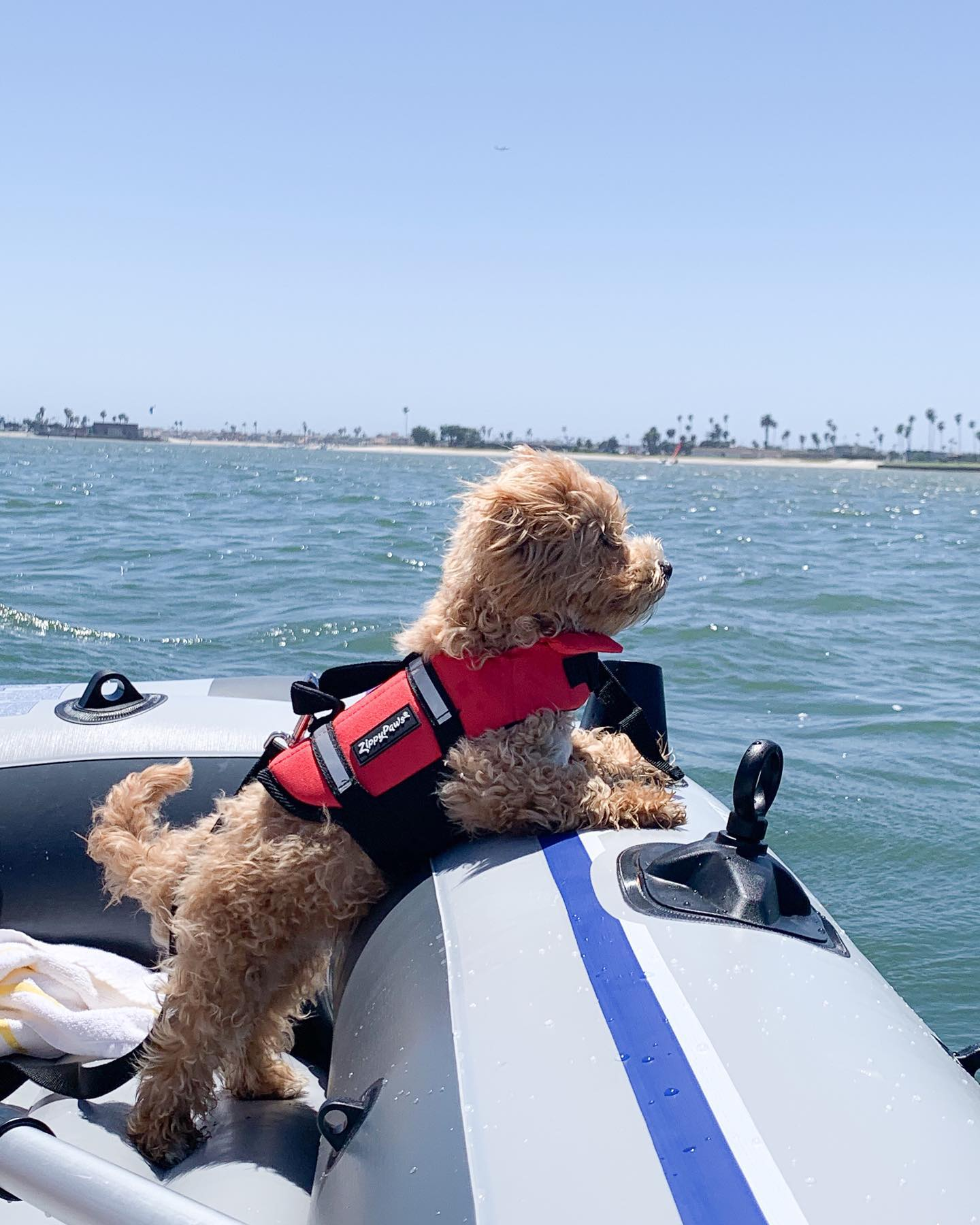 zp-dog-life-jacket-red-7