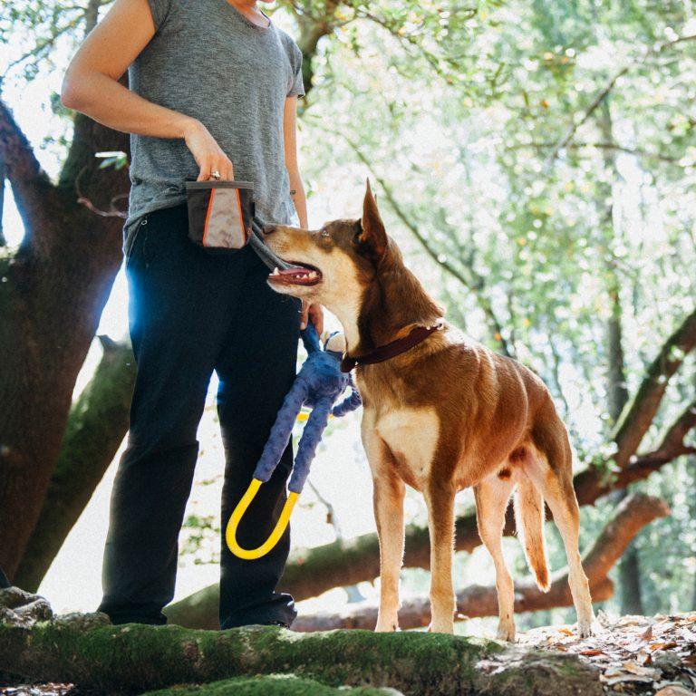 zp-dog-treat-and-training-bag-5