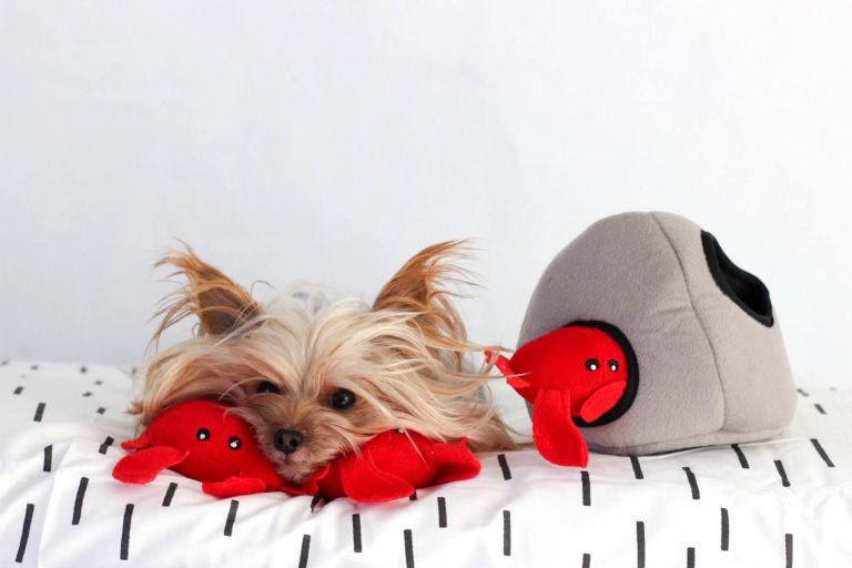 zp-red-crab-burrow-soft-dog-toy-3